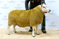 261018 Dingwall - Reserve Champion - Campbell Mill House #2